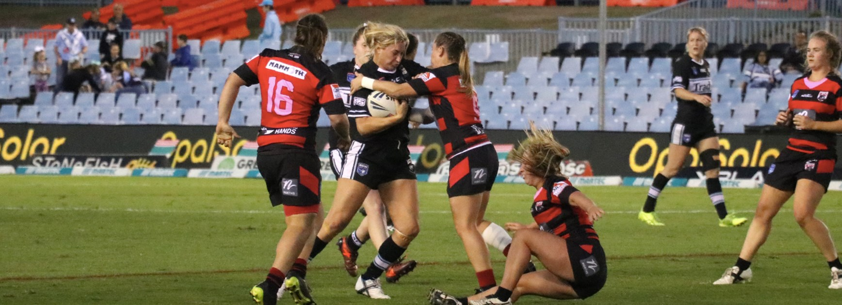 Clinical Sharks girls too strong for the Bears